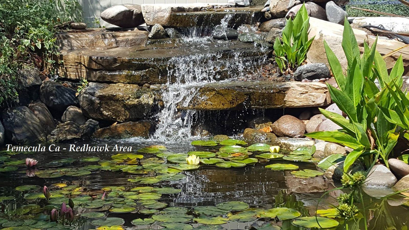 Koi depot of san diego pond service koi pond service for Pond maintenance